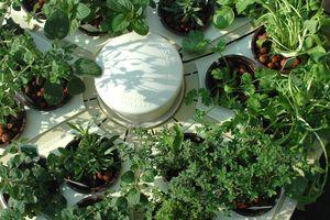 Plants growing in hydroponic garden