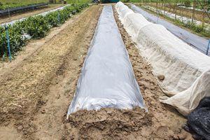 New plastic sheeting weed barrier in vegetable garden