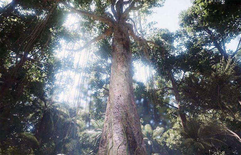 La nueva experiencia de realidad virtual te transforma en un árbol majestuoso