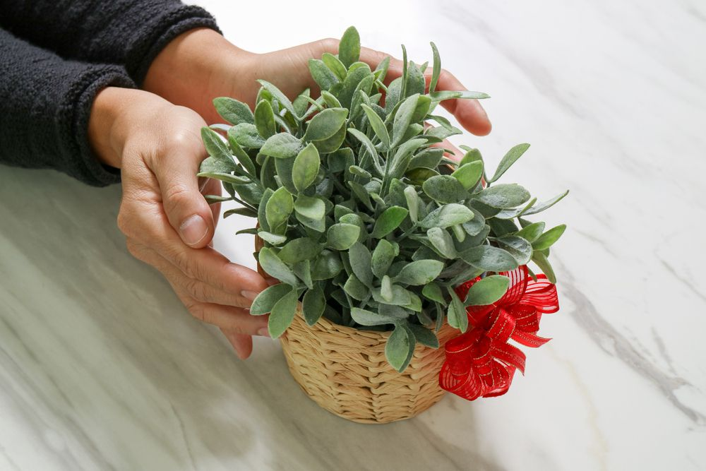 7 of the Best Plants to Give as Gifts