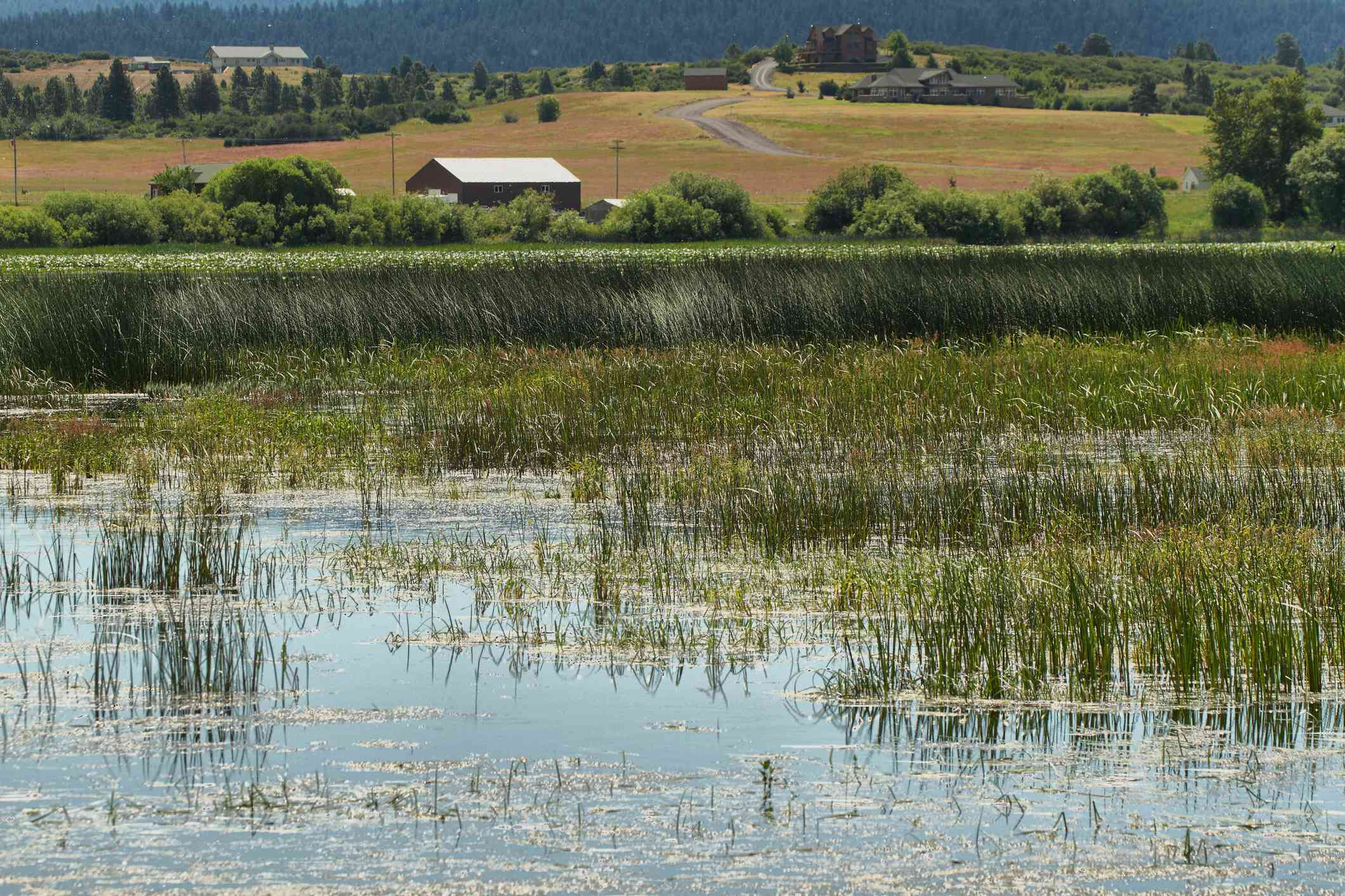 Upper Klamath Marsh with rolling hills and green trees in the distance