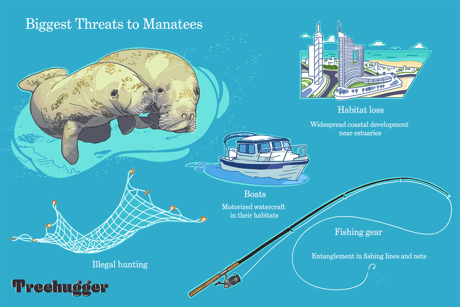 Biggest threats to manatees include boats and illegal hunting illustration