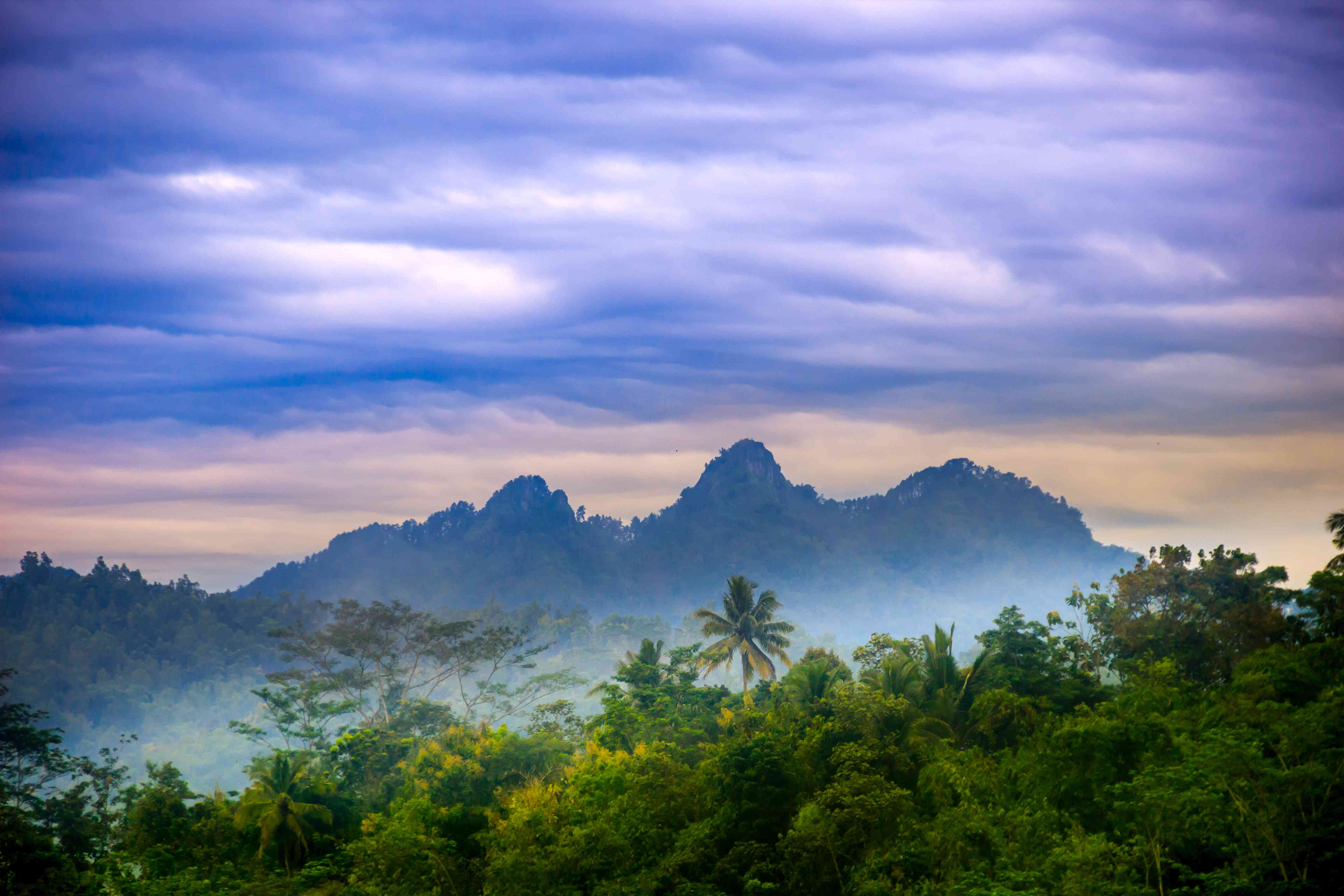 forest in Central Java, Indonesia