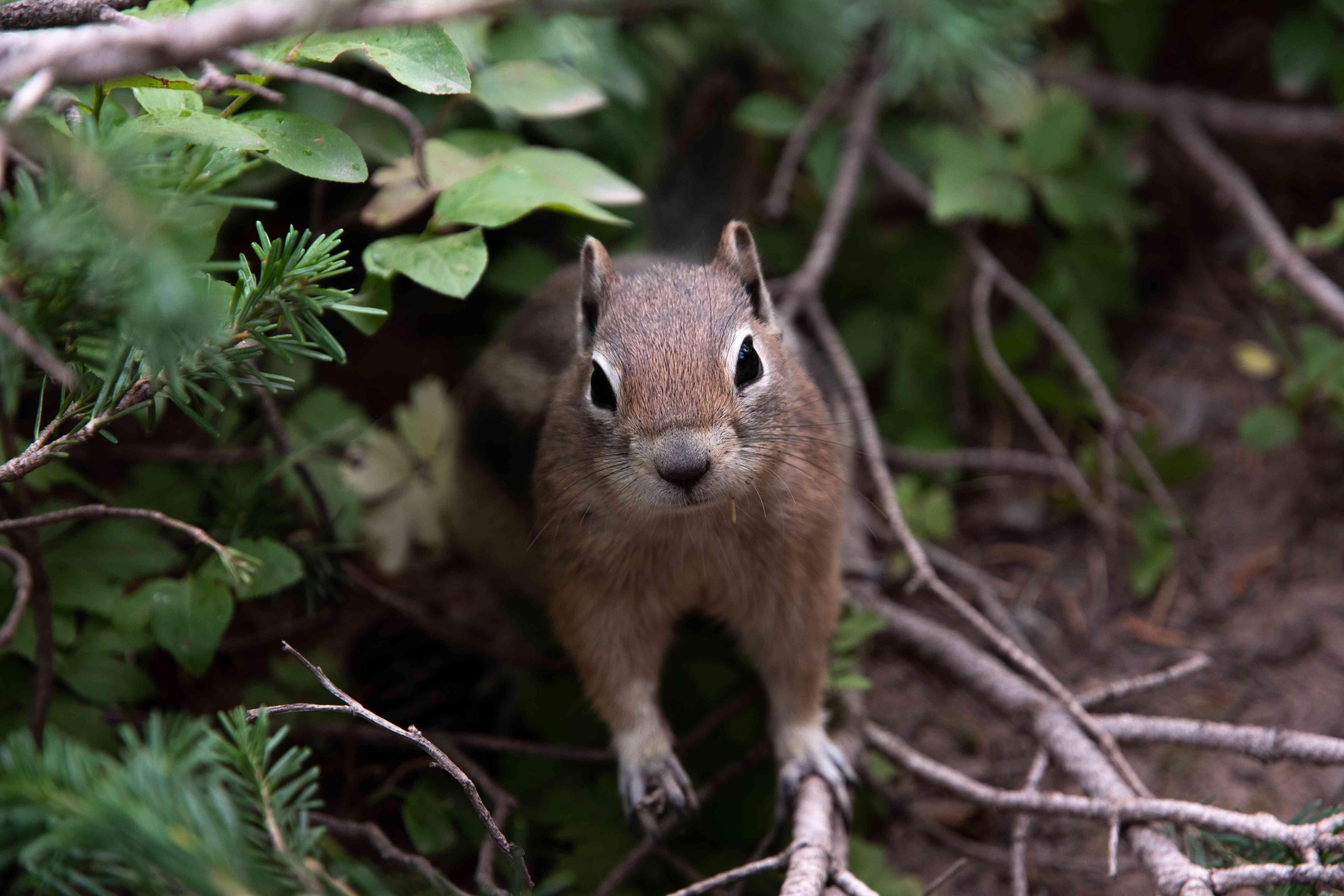 cute squirrel looks into camera