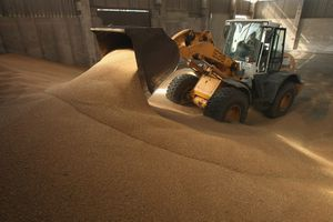 tractor pushing fresh wheat