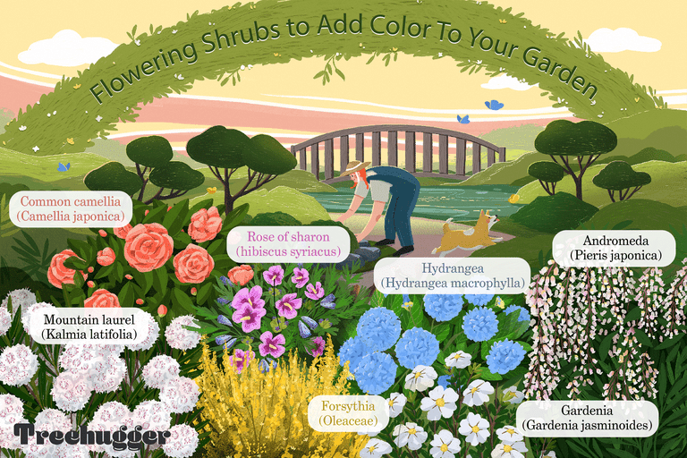 flowering shrubs to add color to your garden