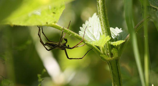 A spider crawling along a leaf