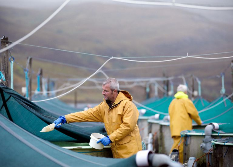 Workers wearing rain slickers feeding fish held in large tanks on an aquaculture farm.