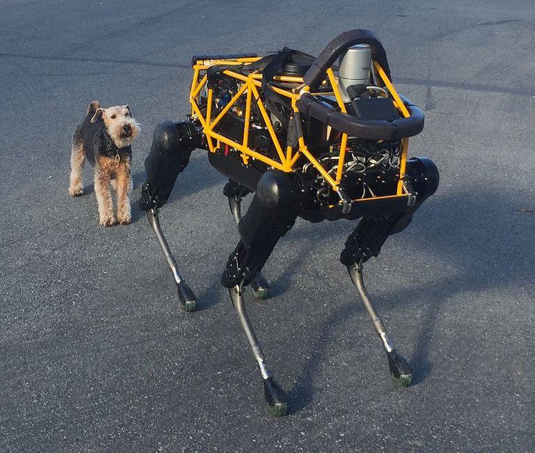 Dog standing behind a robot