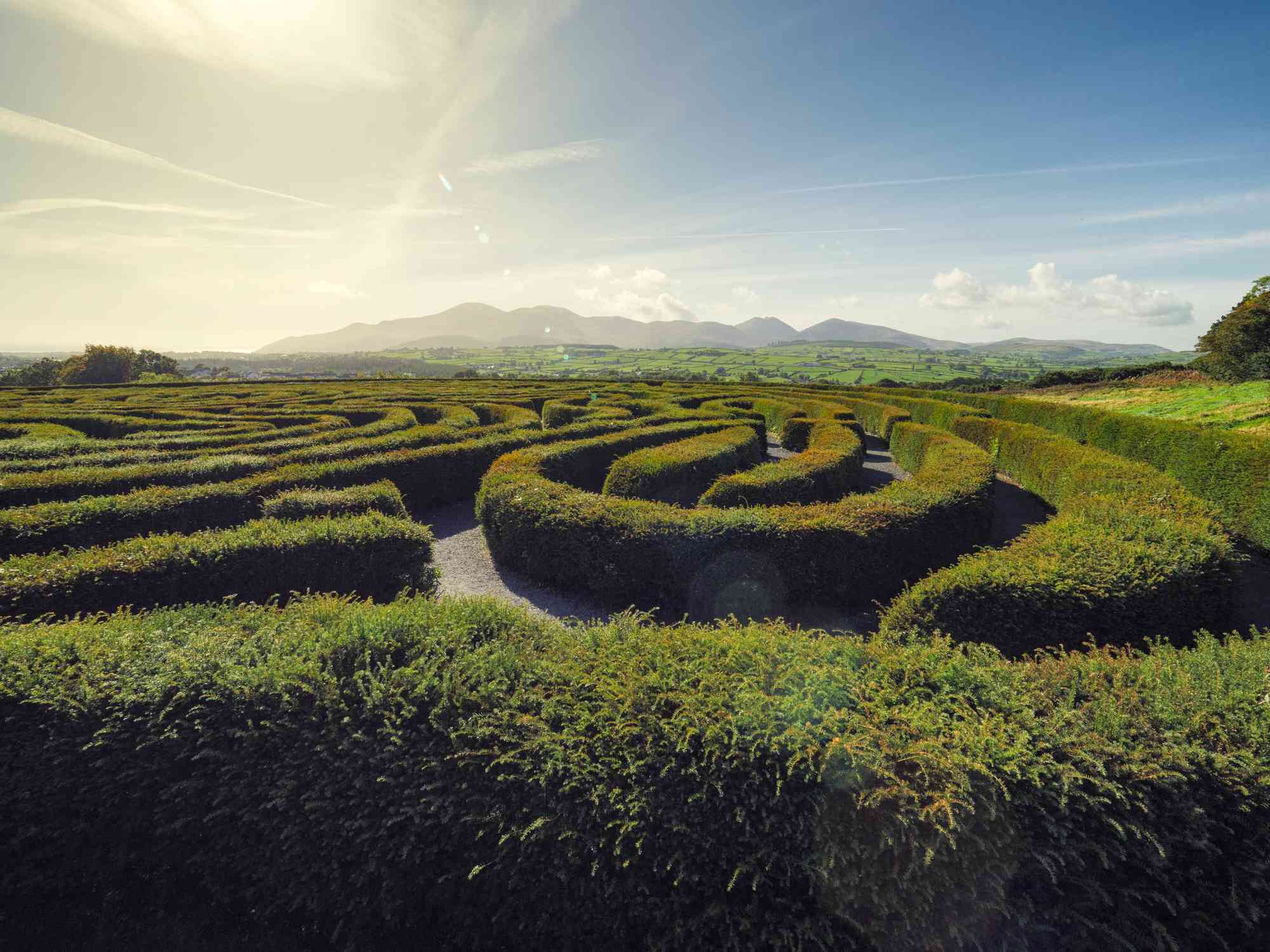 A hedge maze in front of a distant mountain range