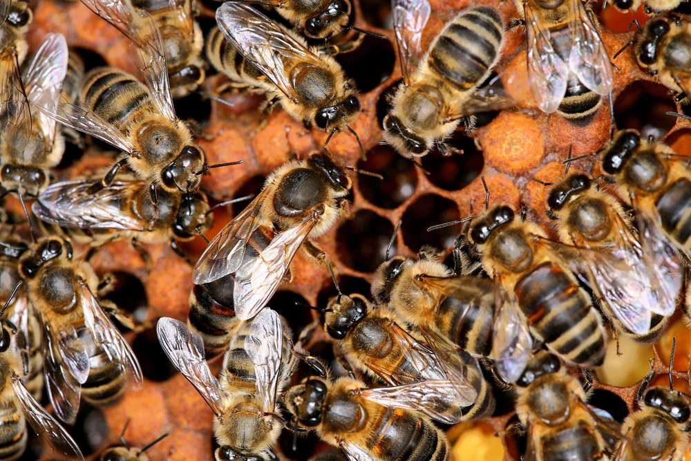 Honey bees are essential to food production, and yet we continue to lose hives at an alarming rate.