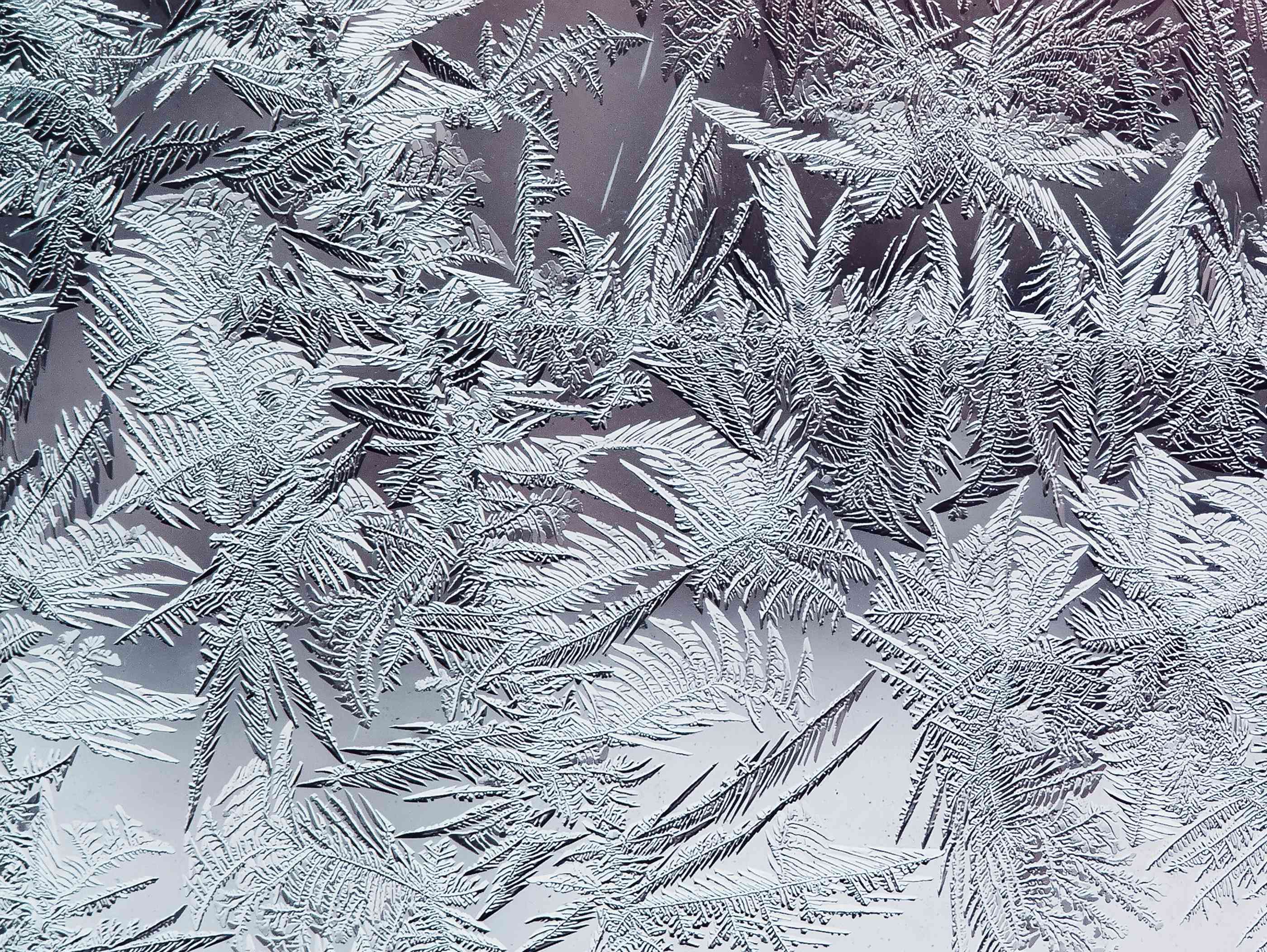 Frost crystals that look like fern, beautiful winter frosty pattern made of brittle transparent crystals on the glass