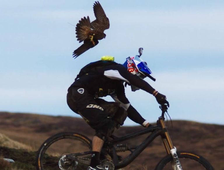 Mira cómo un halcón peregrino persigue a este ciclista profesional de montaña (video)