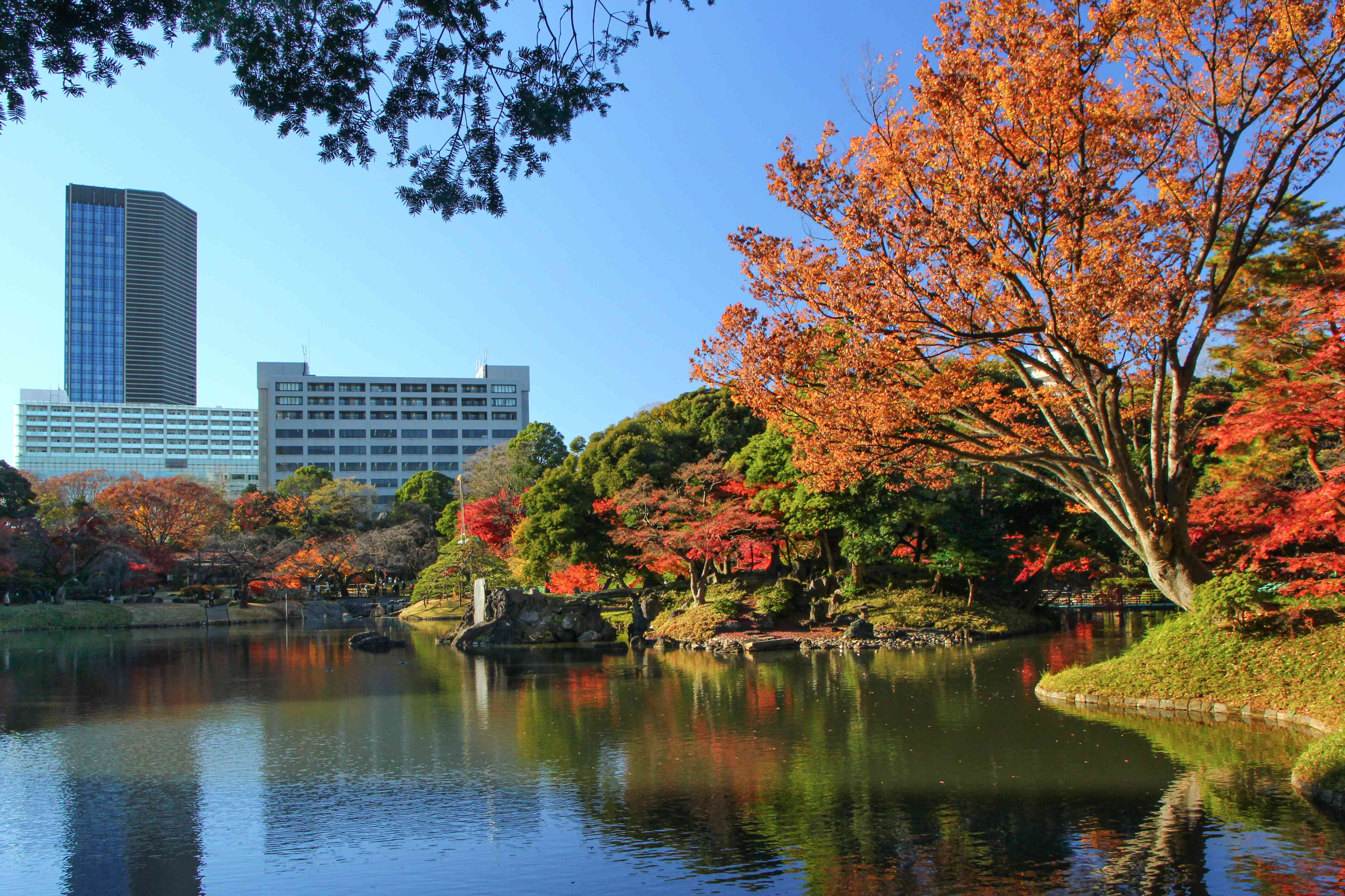 idyllic shot of fall leaves and landscape park and lake with city buildings in background