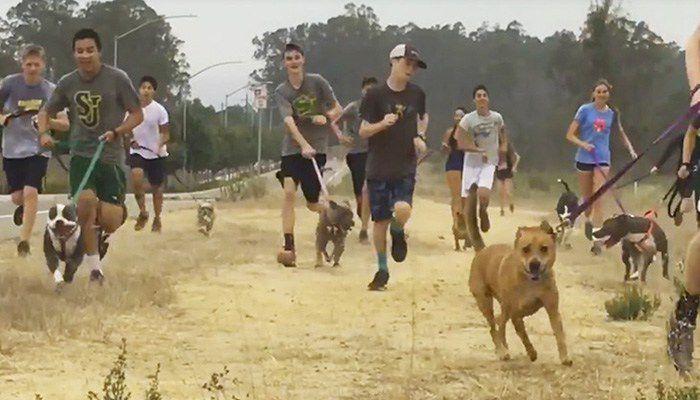 Equipo de campo traviesa corre con perros de refugio, y la idea se enciende