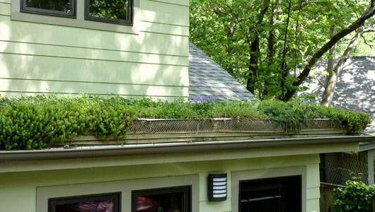 Cómo instalar un techo verde