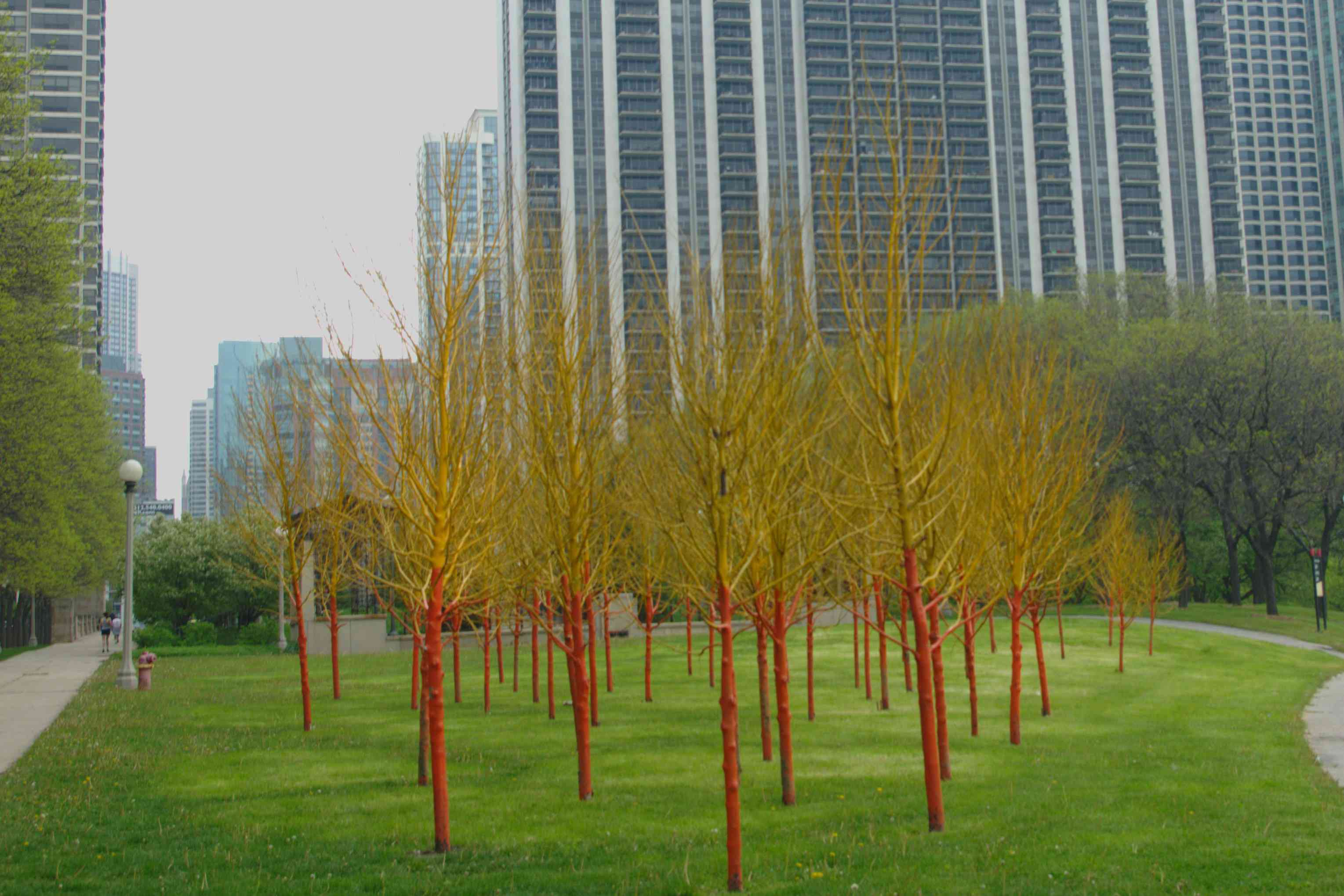 Painted dead trees in a Chicago park