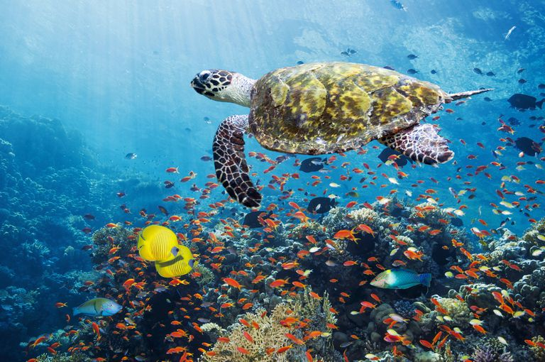 View of an underwater seascape and marine life