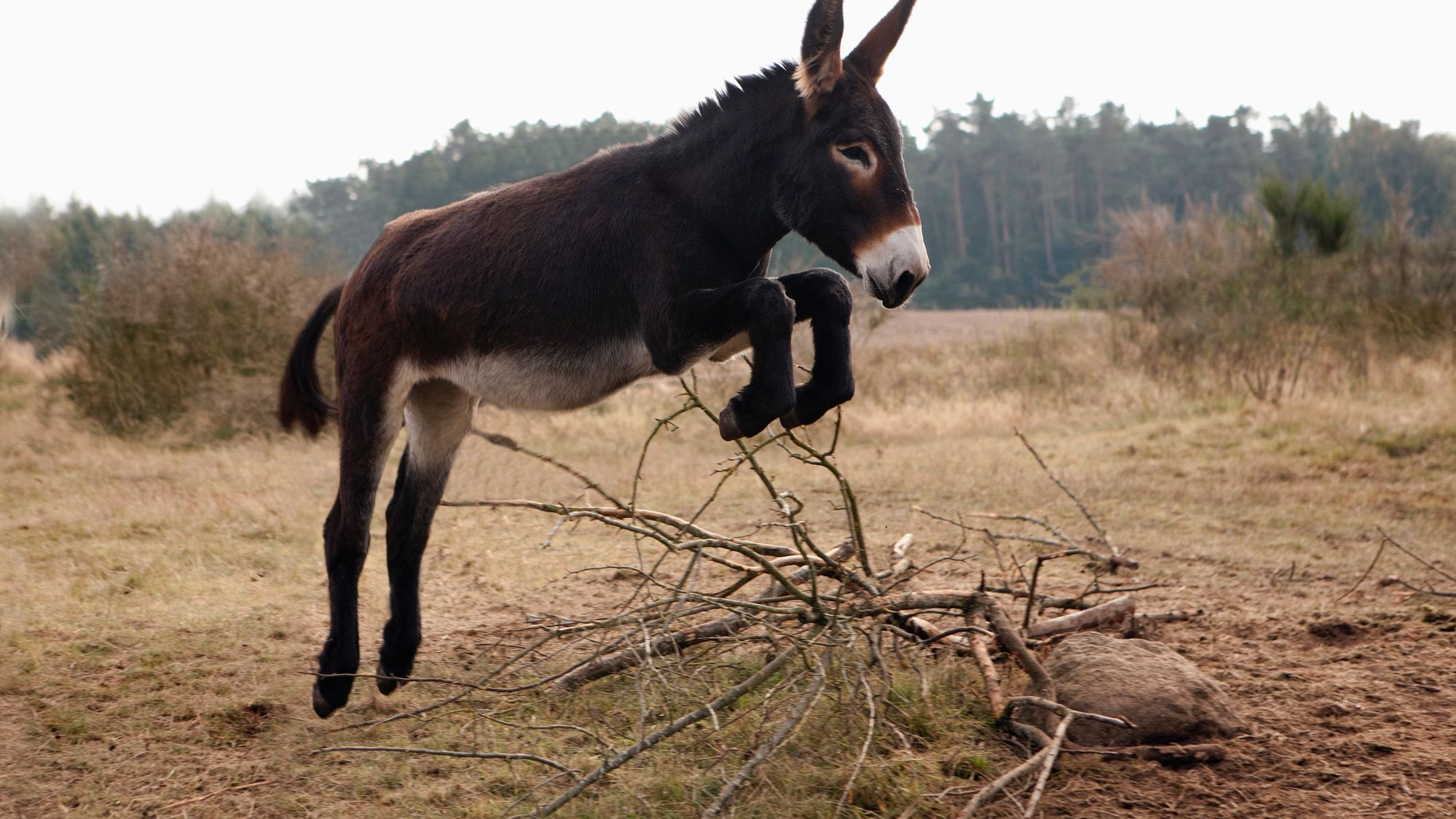 10 Surprising Facts About Donkeys