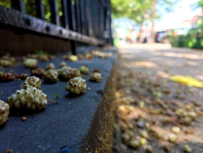 Fallen mulberries on a Brooklyn street