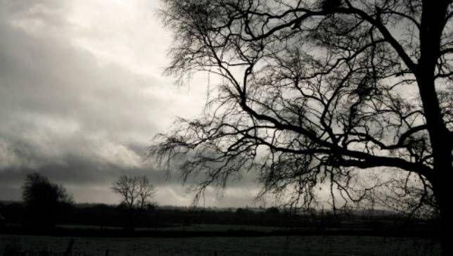 black and white photo of tree and farm from Year in Redwood blog