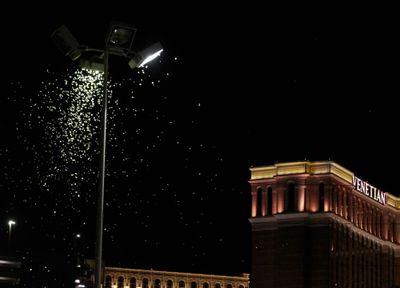 Las Vegas grasshopper invasion