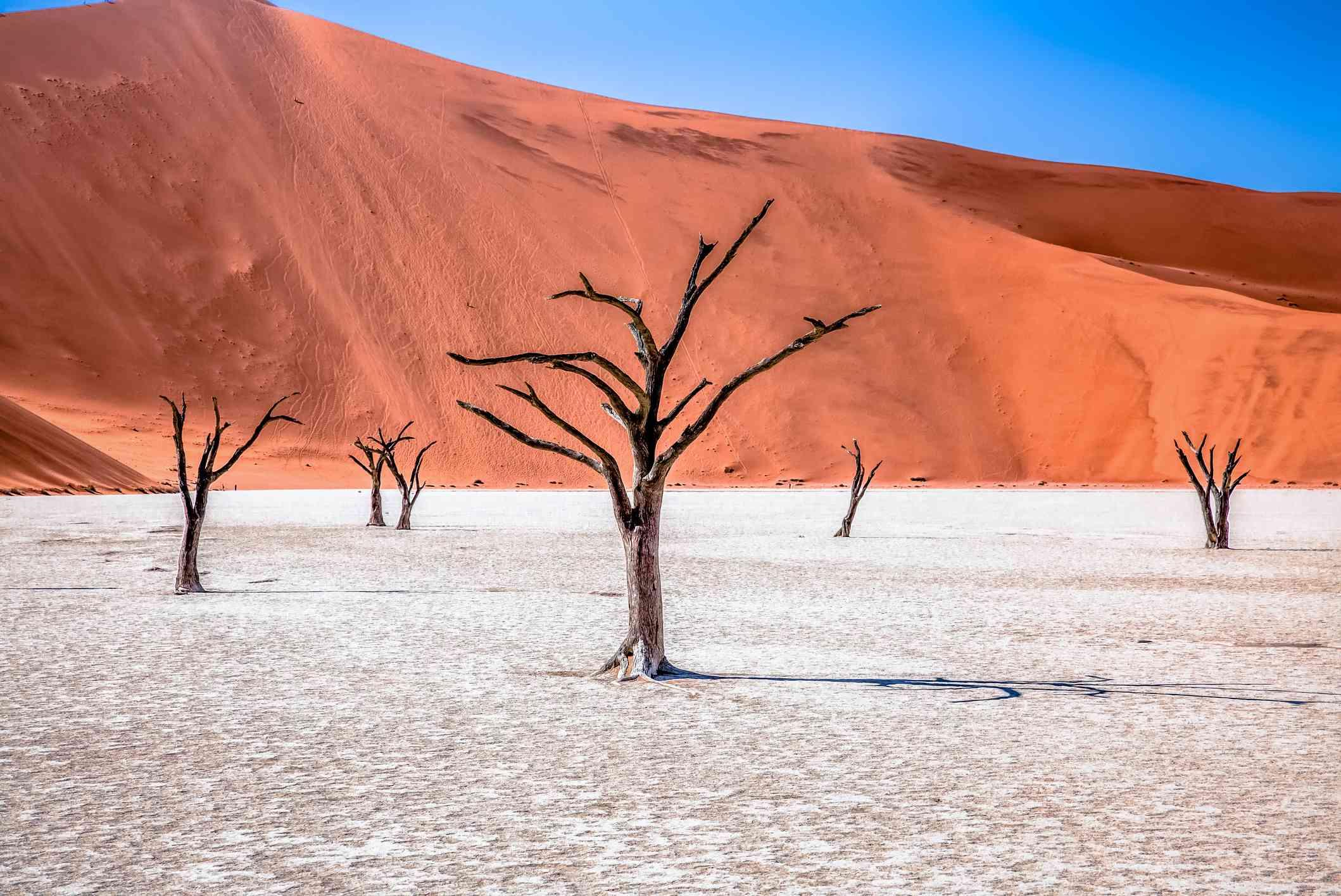 Dead trees in desert at Deadvlei in Namib Desert