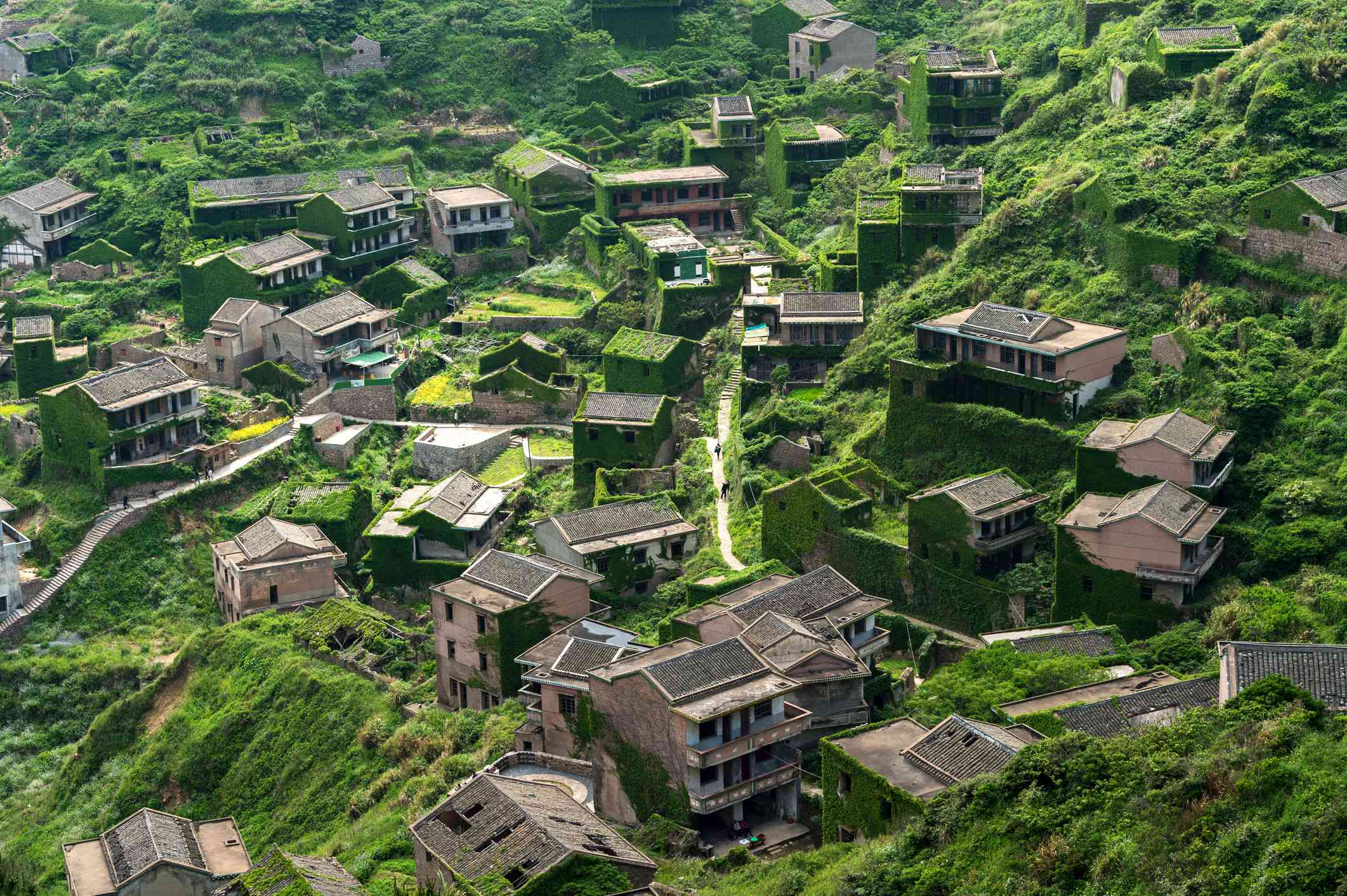 Greenery growing over Gouqi island's abandoned village