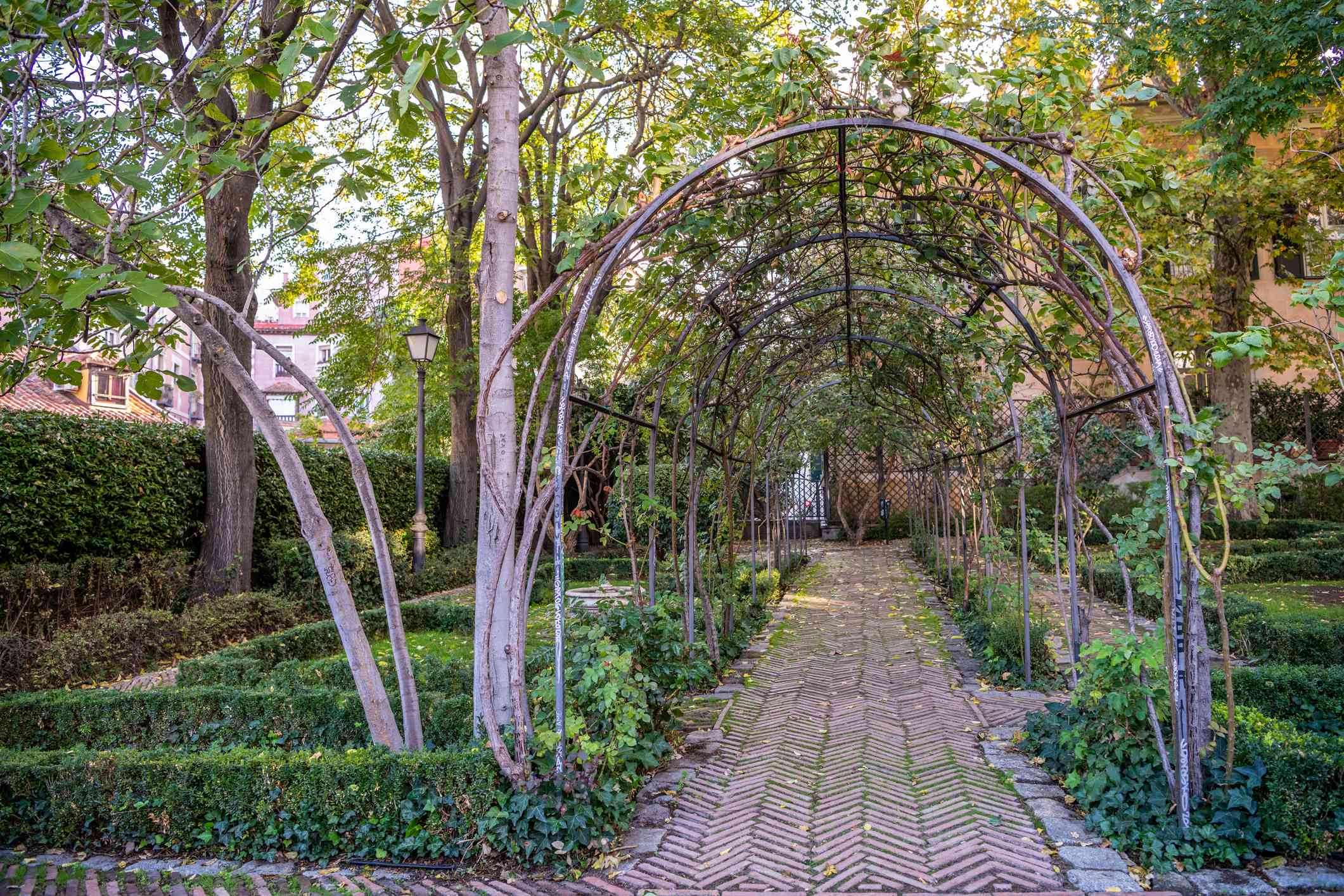 natural archway over a brick path surrounded by tall trees and low, green hedges in the Garden of the Prince of Angola