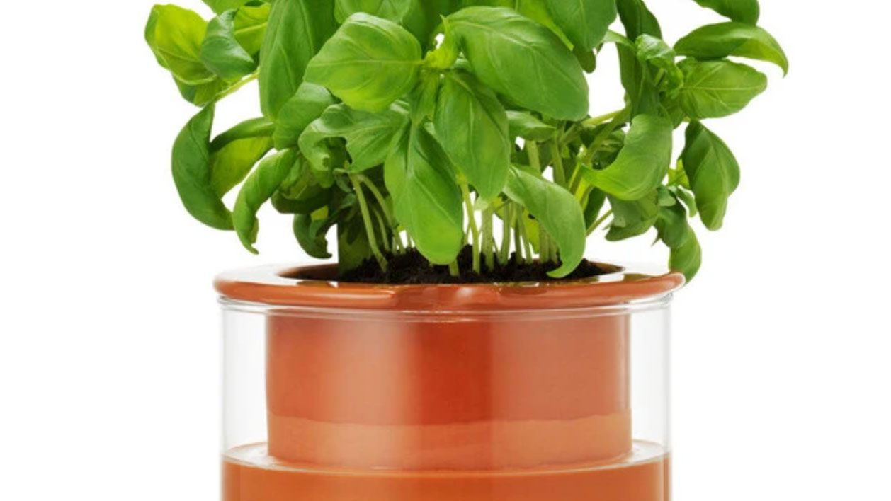 The 10 Best Self Watering Planters Of 2021