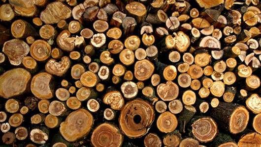 La tecnología hace posible que usted coma madera