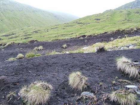 black soil photo