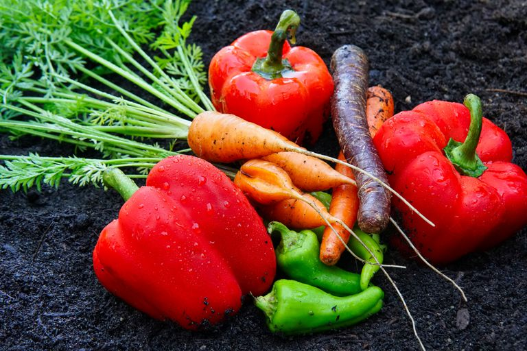 carrots and peppers together on black dirt