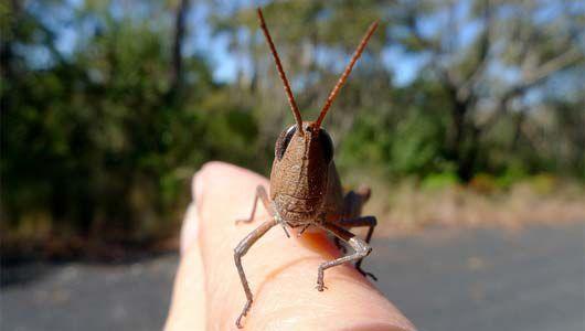 Grasshopper on person's hand