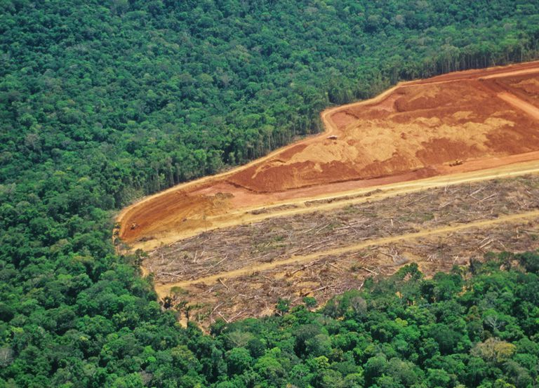 large section of deforestation in the Amazon