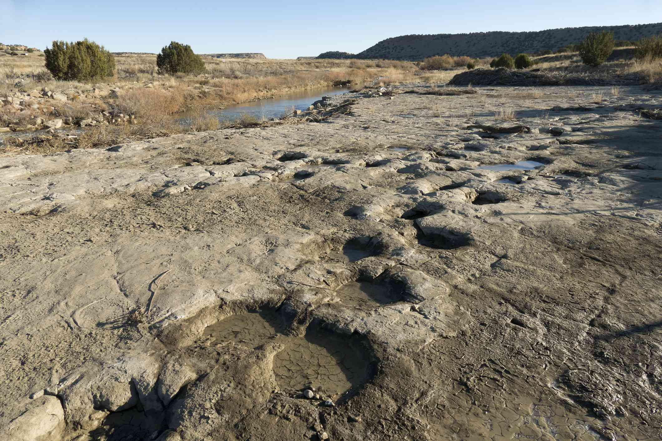 Several sets of large dinosaur tracks on the rocky ground near a river