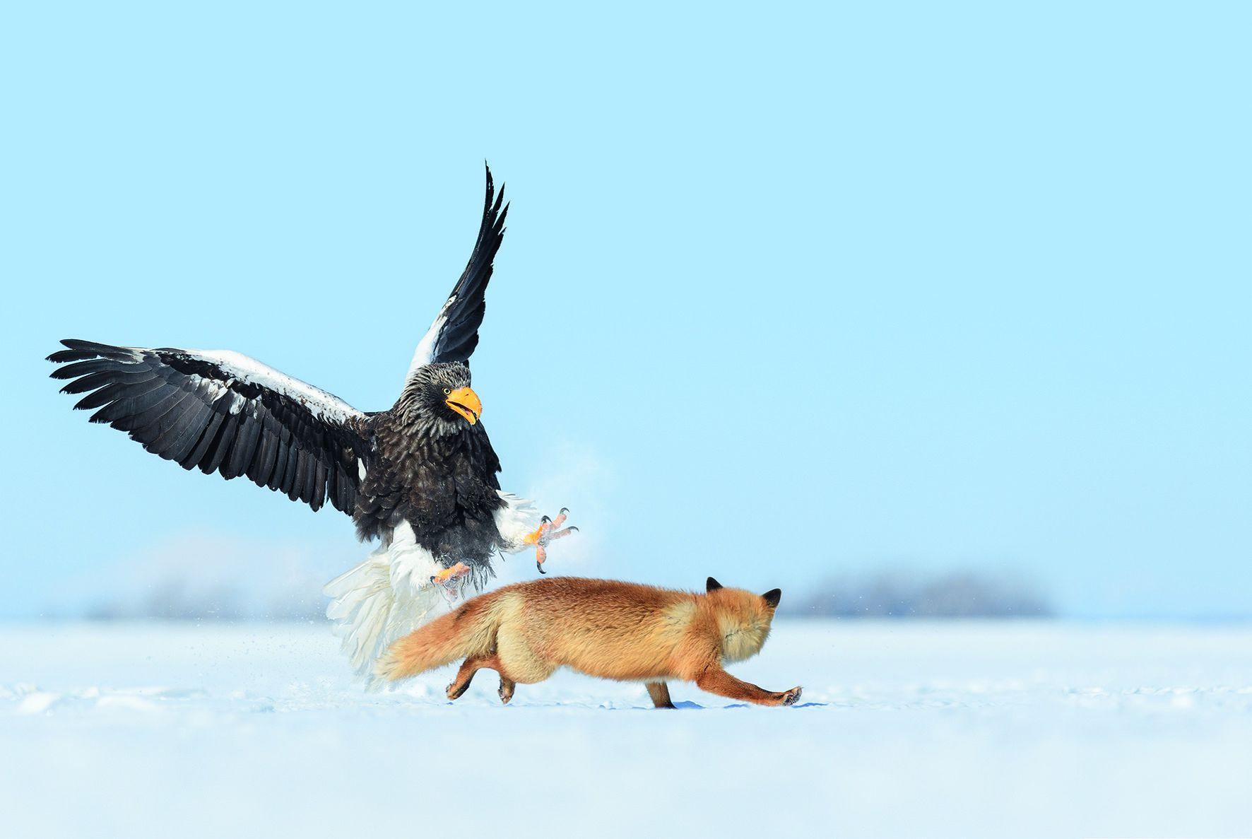 raptor hunting