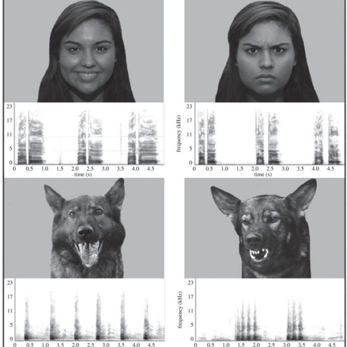 dog sound graph from study