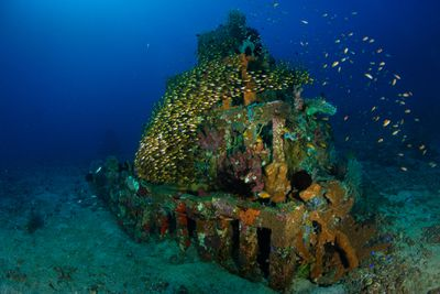 A pyramid-shaped cement structure covered in algae and coral rests on the sea floor