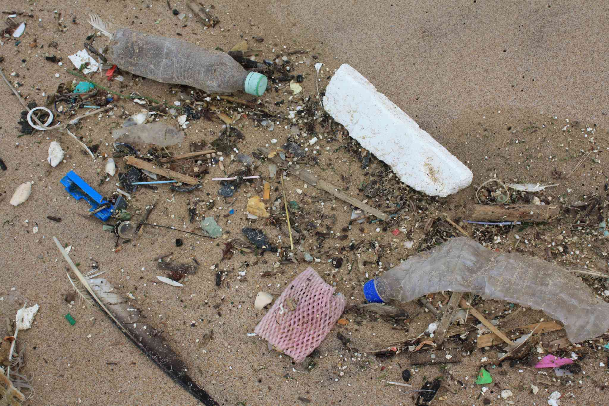 plastic cotton bud sticks, plastic bottles, and other plastic beach debris