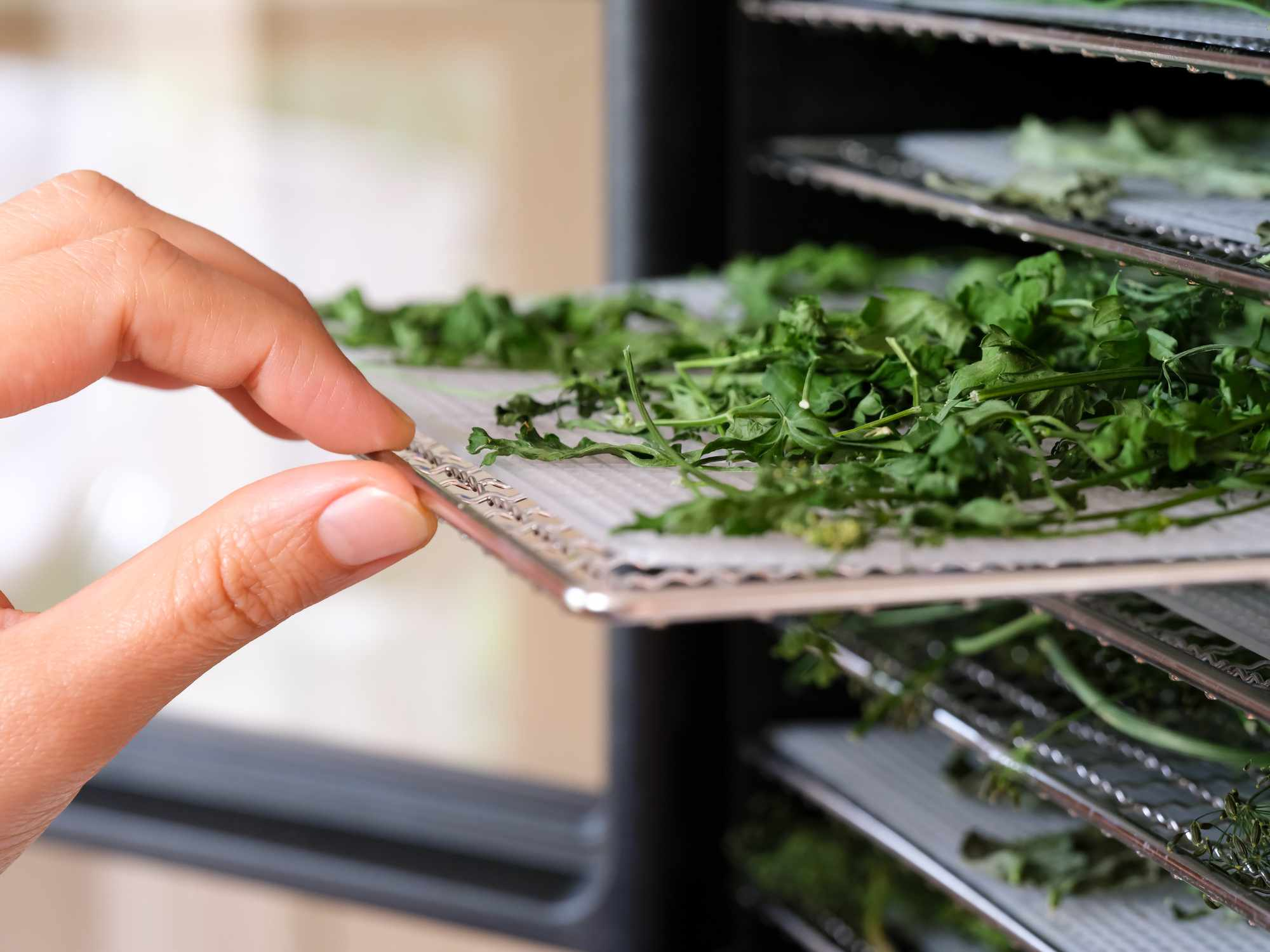 A woman removing a tray of parsley from a food dehydrating machine
