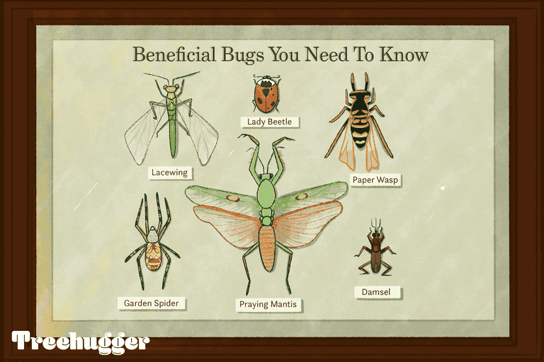 beneficial bugs you need to know