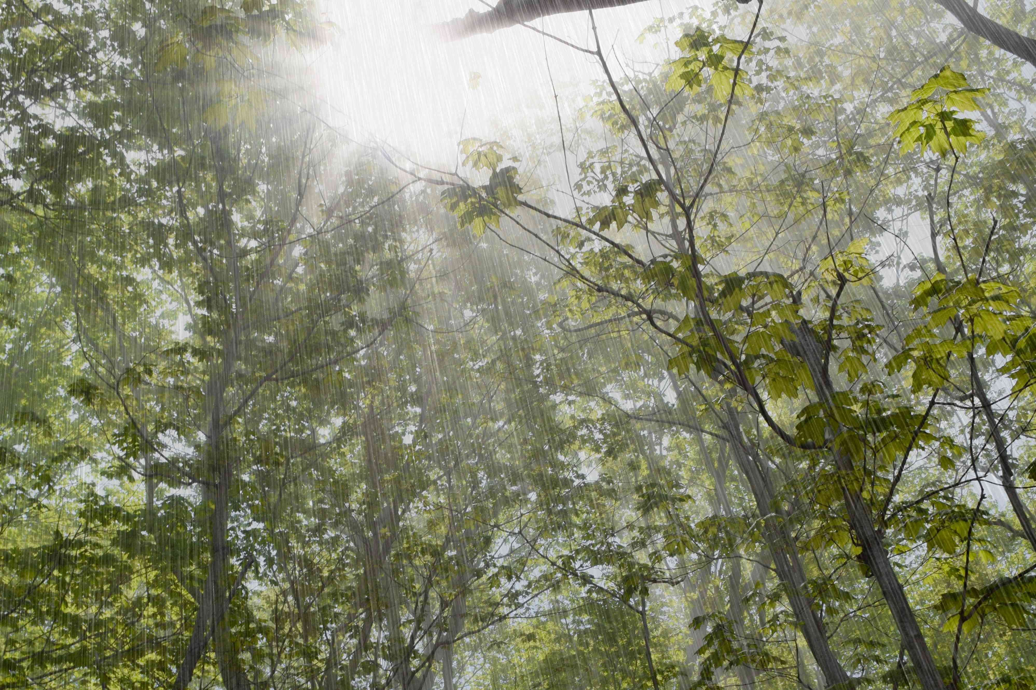 rainstorm with sunlight in forest