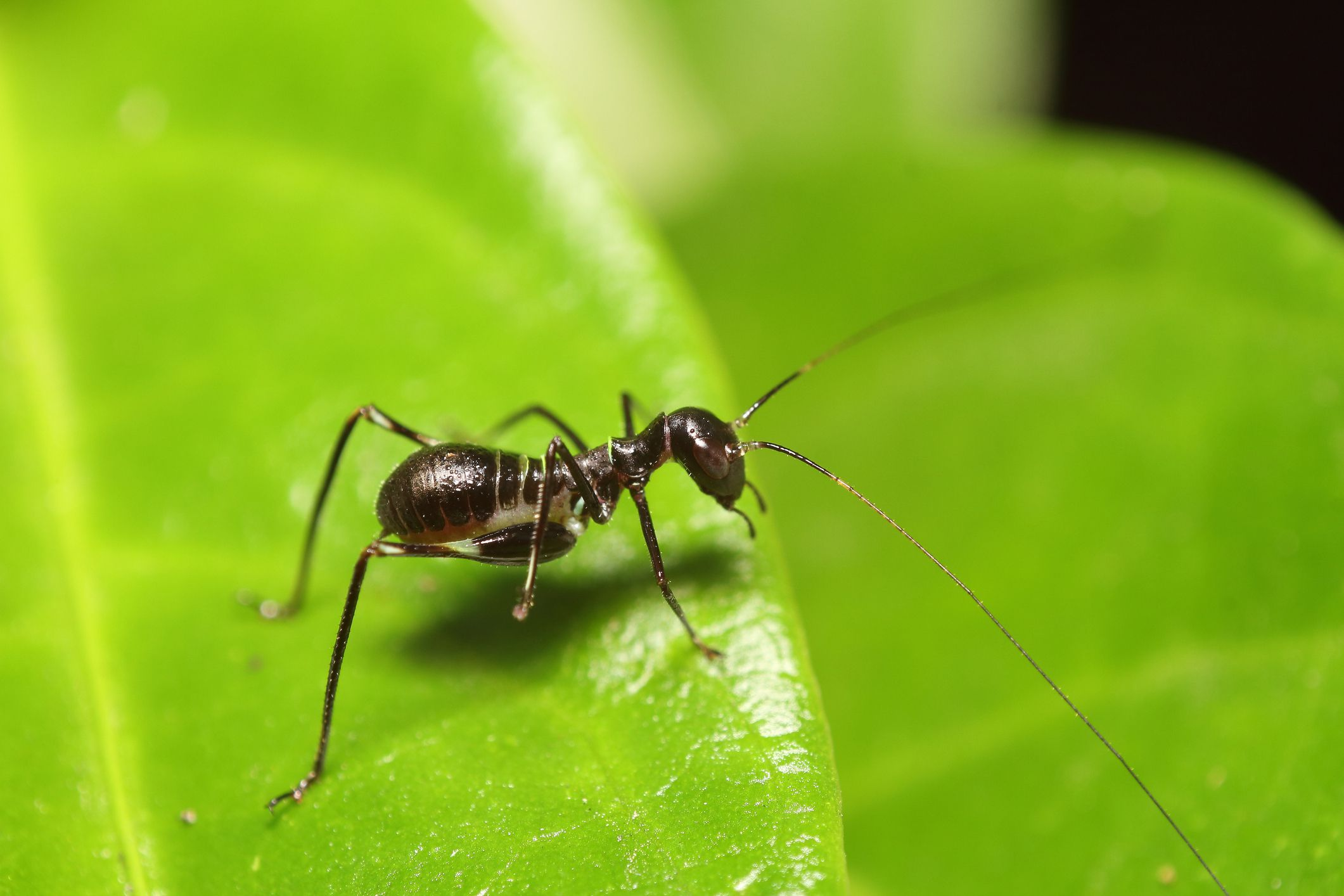 This Is Not An Ant It S A Spider