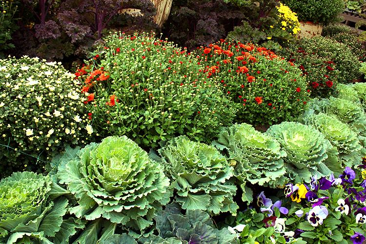 Fall Container Garden Plants, Ramon Gonzalez