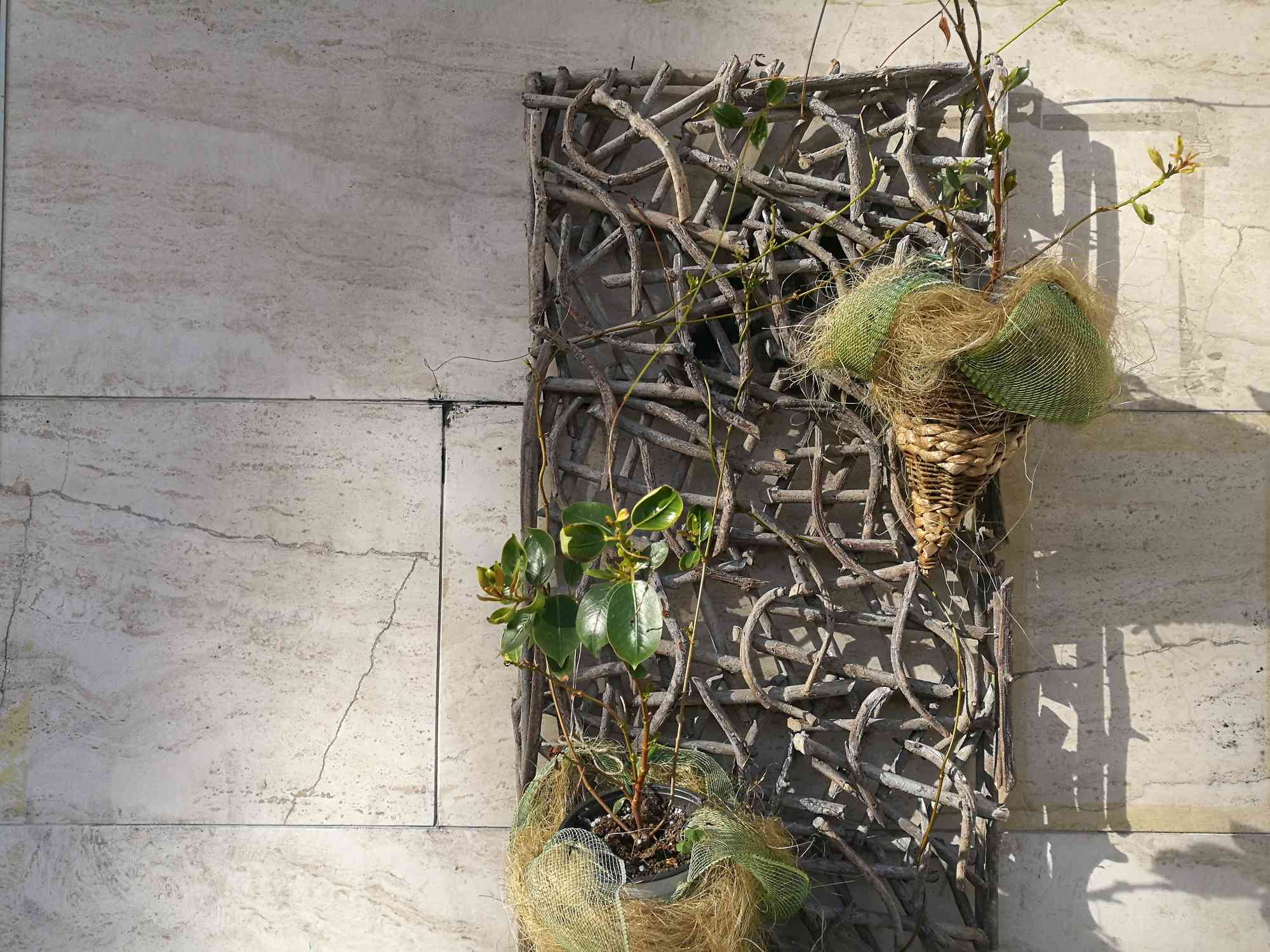 Potted plants hanging on a trellis made from twigs and branches