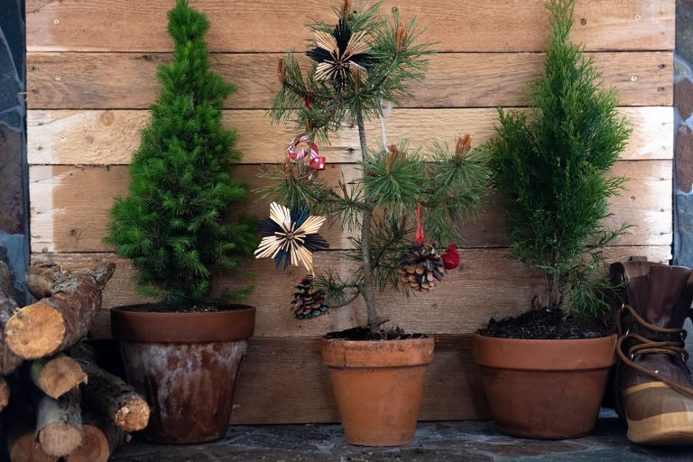 three potted Christmas trees, one with decorations, next to logs and boots