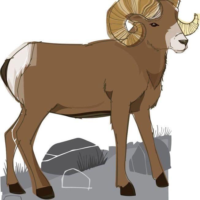 An illustration of a bighorn sheep