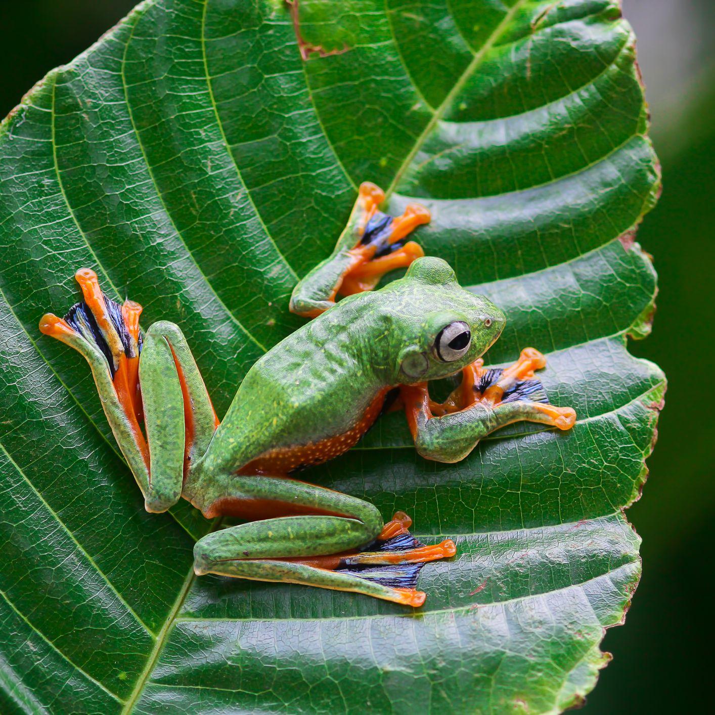 15 Fascinating Frog Species