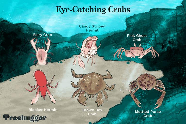 eye-catching crabs underwater illustration